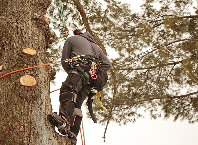 Elmore's Tree Service employee trimming a tree