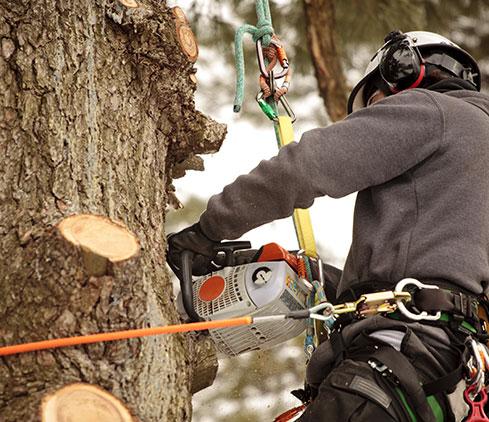 Elmore's Tree Service employee cutting a tree down